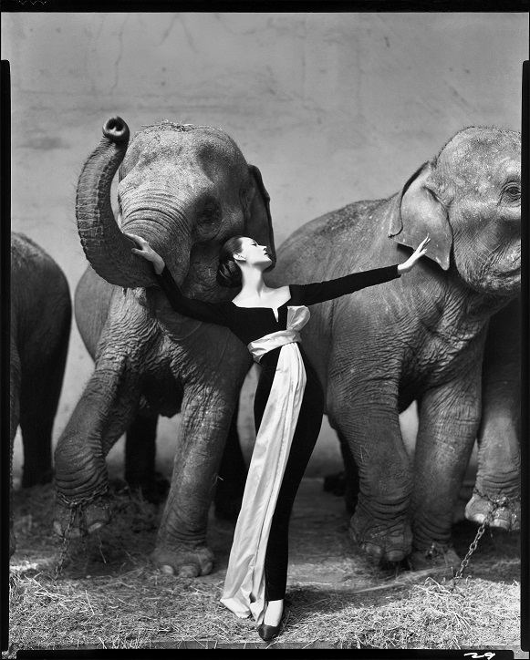 Dovima-with-Elephants-at-Cirque-DHiver-Paris-August-1955_WEB